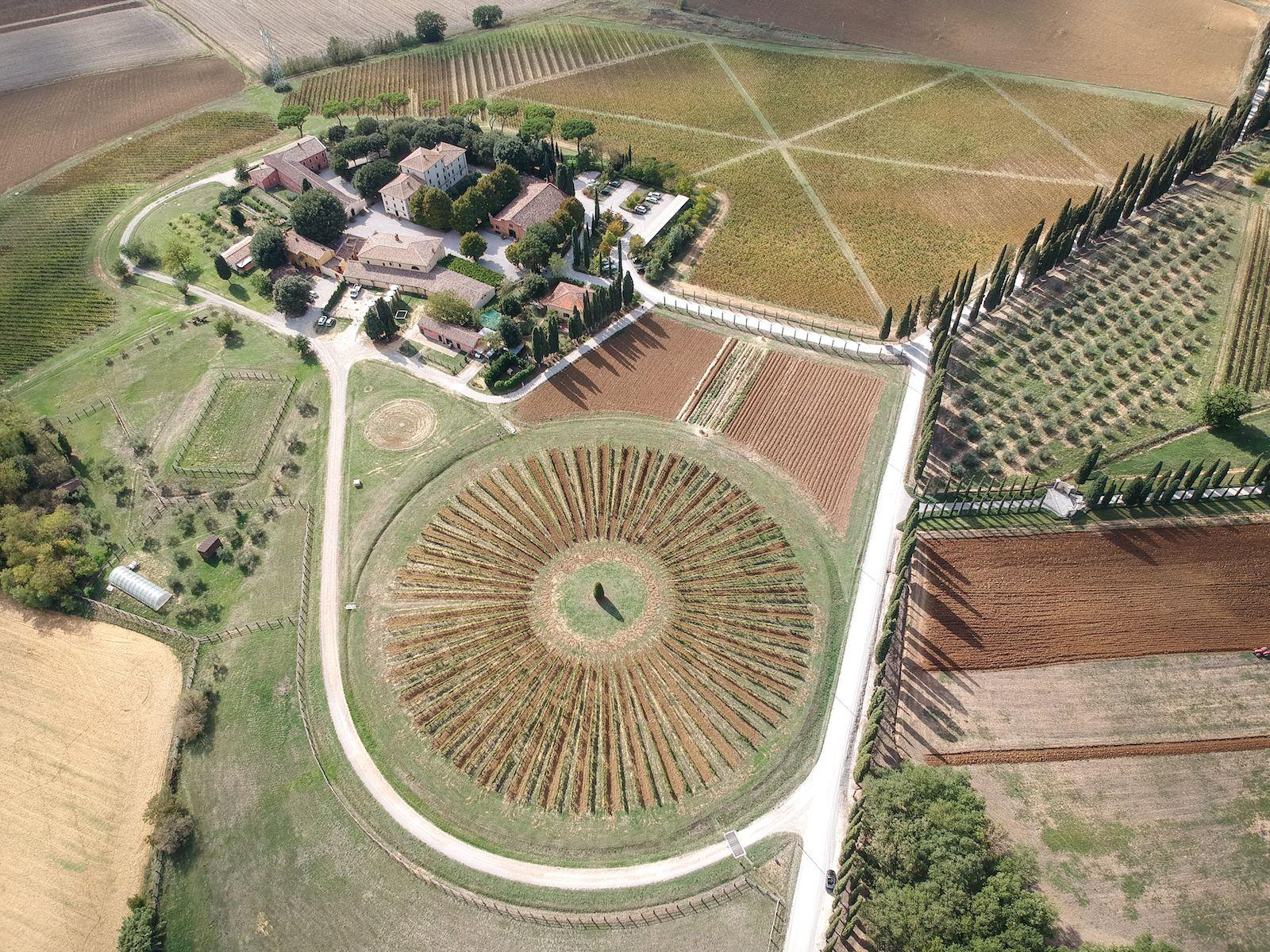 Avignonesi wine farm